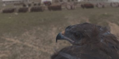 New course: <em>Compositing in After Effects: Eagle Flight Project</em>